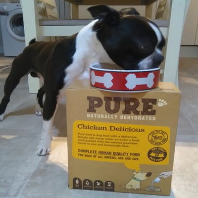 """MY BOSTON TERRIER LOUIS HAS BEEN ON PURE SINCE JUNE AND IT'S BEEN A GOD SEND"""