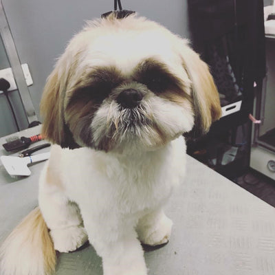 """Martha my little ShihTzu loves this xx. No more runny poos!!"""