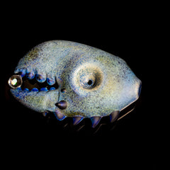 Pubz - Sandblasted Rare Blue Lobster Opal Pincher Dry Pipe