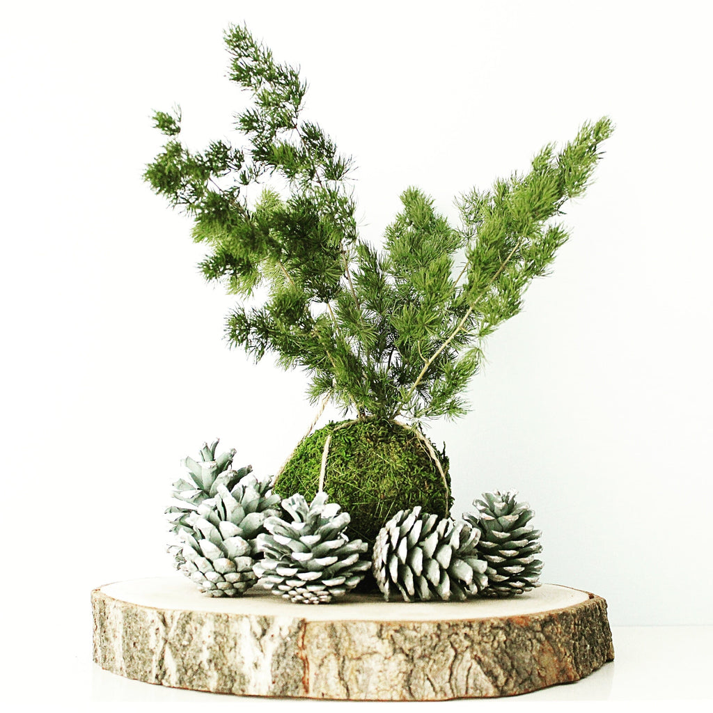 Kokedama Ming Fern (Limited Edition) - Let us be