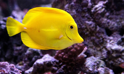 The Most Common Saltwater Aquarium Mistakes