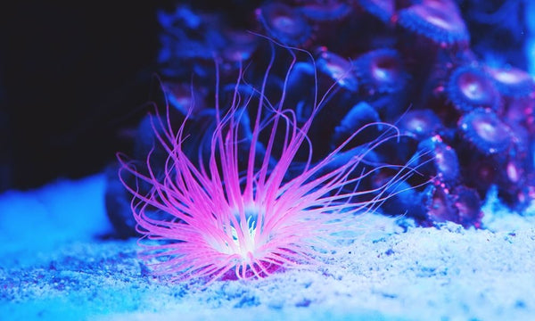 Tips for Changing the Water in Your Saltwater Aquarium