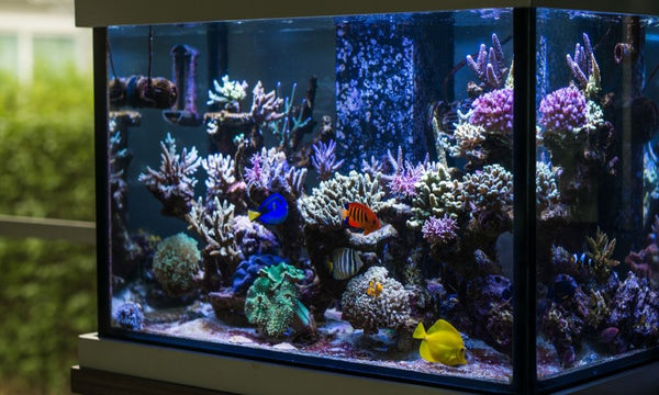 Your Guide to Setting Up a Reef Tank