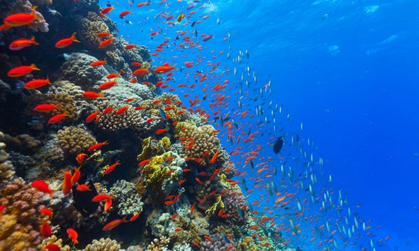What Do Coral Reefs Need to Survive