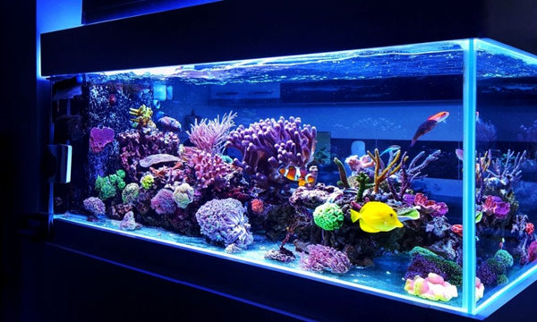 The Importance of PAR in Your Coral Reef Tanks