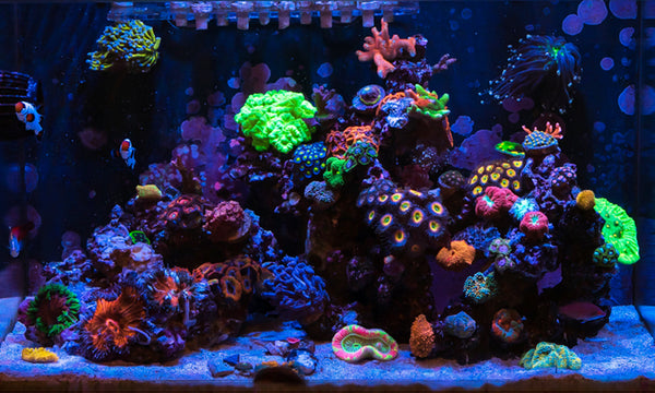 Nano Reef Aquariums: What You Should Know