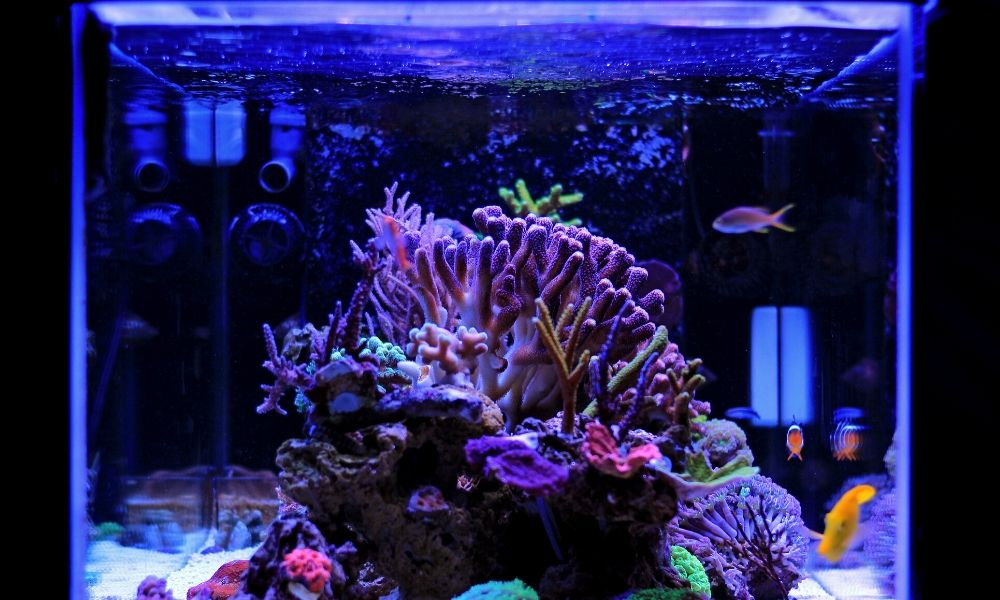 The Importance of Water Flow in Your Reef Aquarium