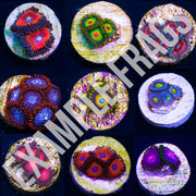 Zoanthid Frag Pack