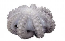 Octopus whole Clean 1 Kg (Isi 250-500gr per Pack)