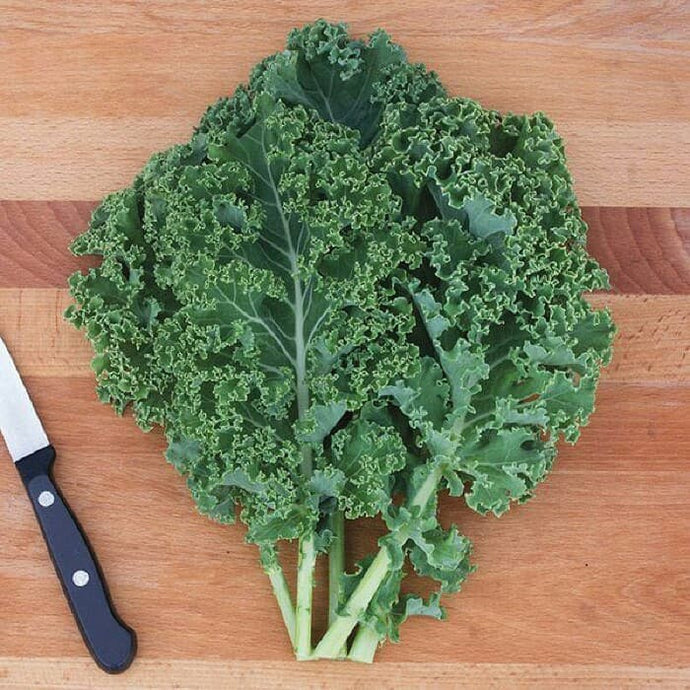 Harvest Chinese Kale 200gr/Pack
