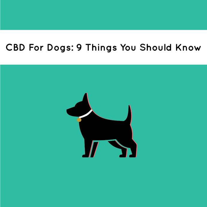CBD For Dogs: 9 Things That You Need To Know