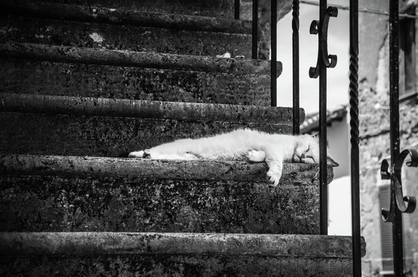 A nap of a nice cat in Pitigliano - Italy