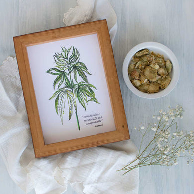 Botanical Watercolor Illustration