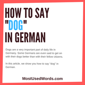 How Do You Say Dog in German? (And Learn Some Basic Dog Commands in German!)