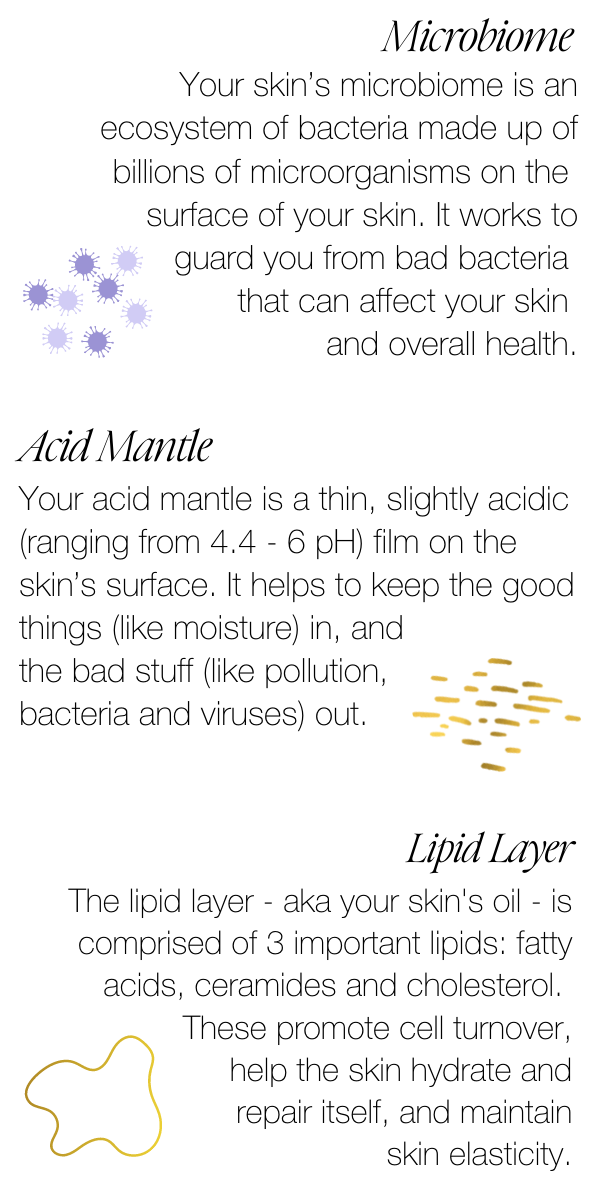 all about the skin barrier