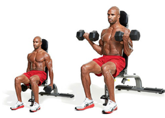 Fitness model doing dumbbell curls seated
