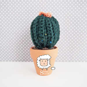 Mini Cactus - Made to Order