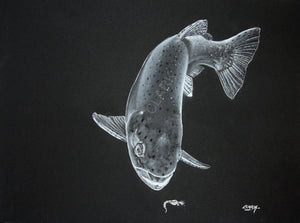 Spring emergence- Rainbow trout (SOLD)