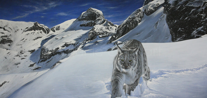 Lynx in the Rockies