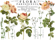 Load image into Gallery viewer, Flora Parisiensis IOD Transfer