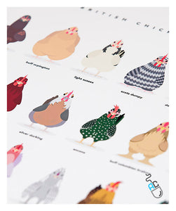 Chicken breeds UK