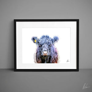 Belted Galloway Cattle Art Print