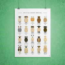 Load image into Gallery viewer, sheep breeds types poster art print