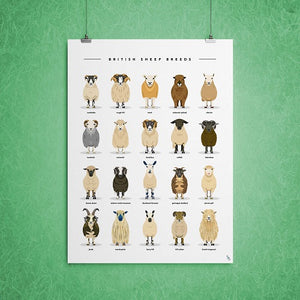 sheep breeds types poster art print