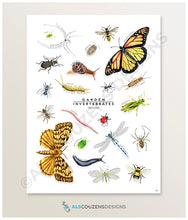 Load image into Gallery viewer, Insect identification poster