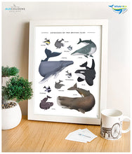 Load image into Gallery viewer, Dolphin art print