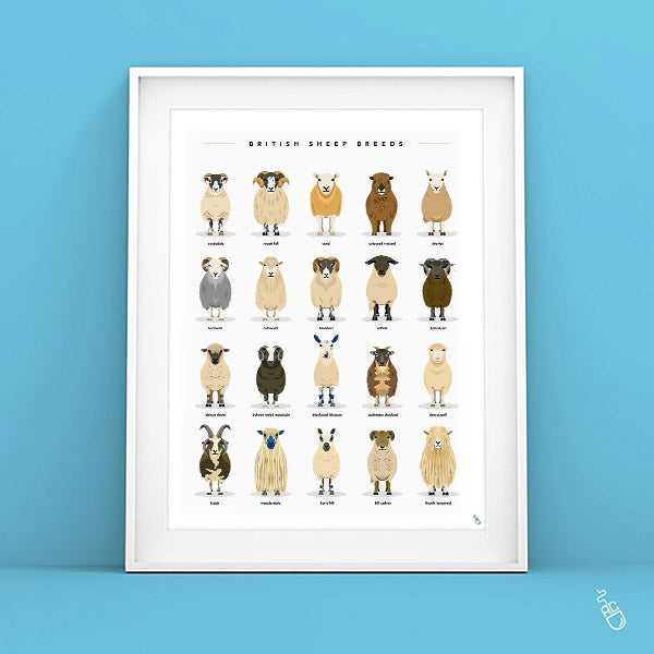 Sheep breeds art print