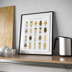 British sheep breeds poster