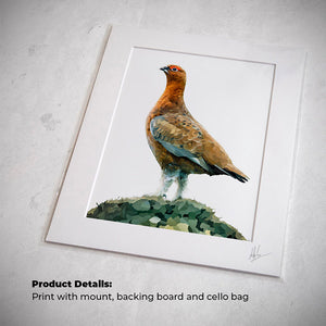 Red grouse painting