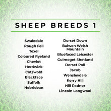 Load image into Gallery viewer, Sheep Breeds Print - British Sheep Art Print