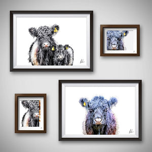 Belted Galloway Cattle Art Print - Small