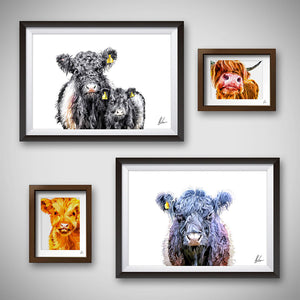 Belted Galloway art print