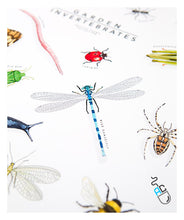 Load image into Gallery viewer, Insect art print