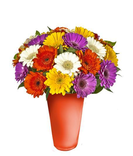 MIX RAINBOW GERBERA VASE