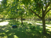 Trickett's Grove New Zealand Walnut Orchard