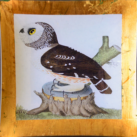 "10"" decoupage plate featuring an owl with gold leaf border"