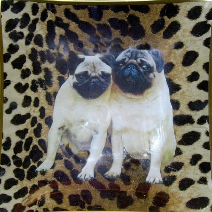"6"" decoupage plate featuring a couple of Pugs hand cut on leopard print"