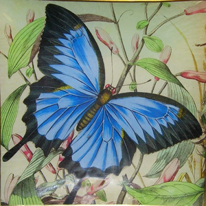"8"" decoupage plate featuring a blue butterfly"