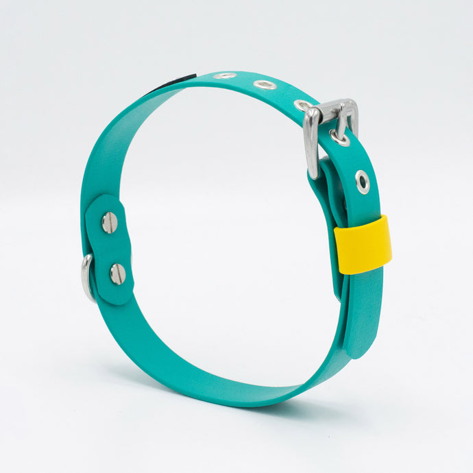 The Macaw Collar
