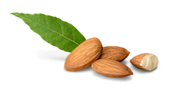can dogs eat almond nuts aflatoxin poisoning