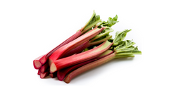 can dogs eat rhubarb
