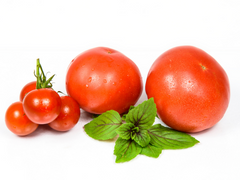 can dogs eat tomatoes poisonous solanine