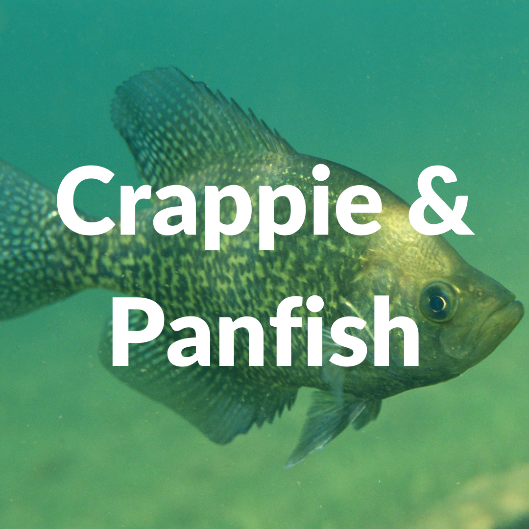 Discount Tackle Crappie / Panfish Fishing Collection