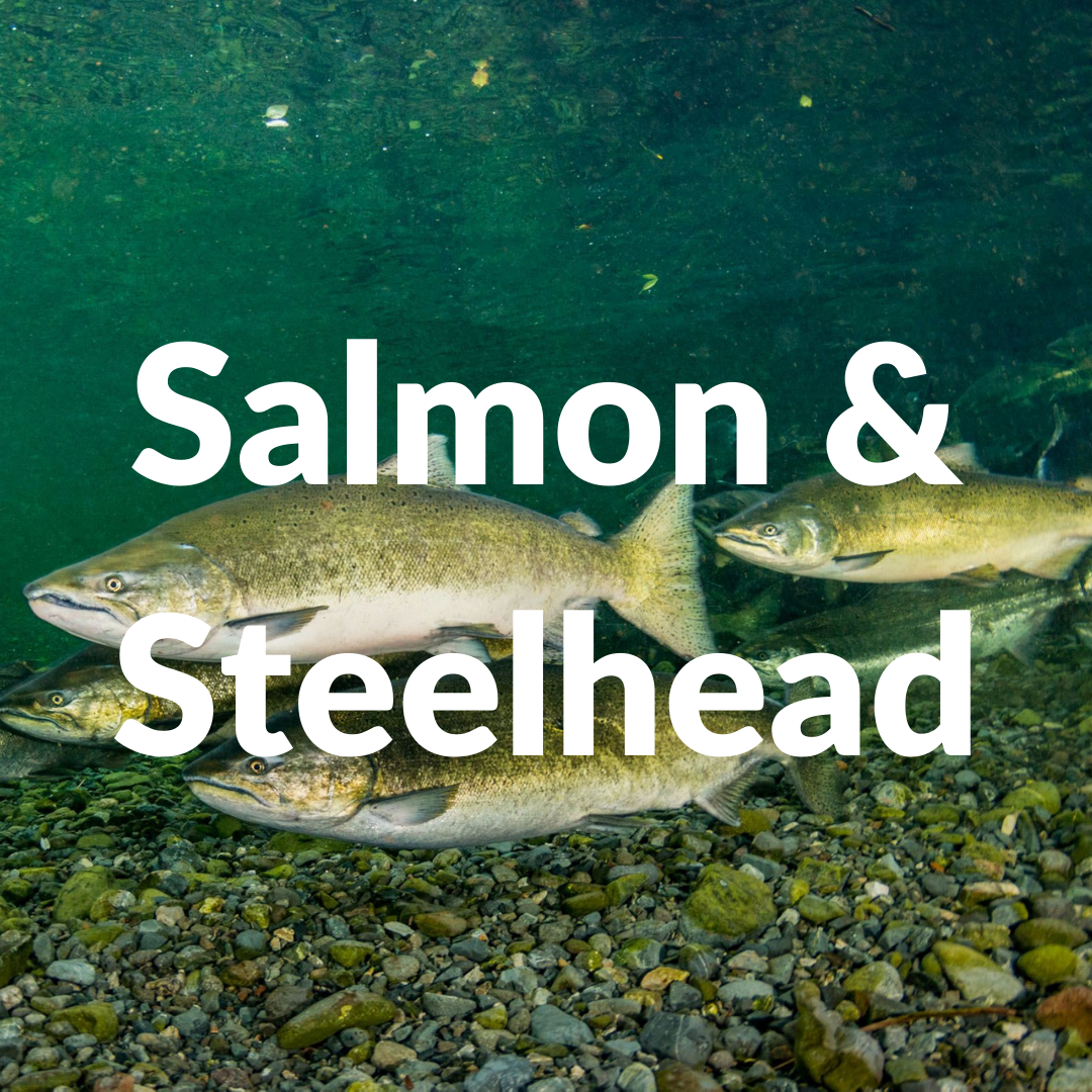 Discount Tackle Salmon & Steelhead Fishing Collection