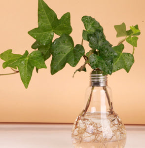 Transparent Tabletop Glass Vase Bulb Shape Hydroponic Container Terrarium Plant