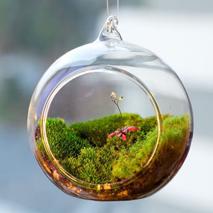 Terrarium Ball Globe Shape Clear Hanging Glass Vase Flower Plants